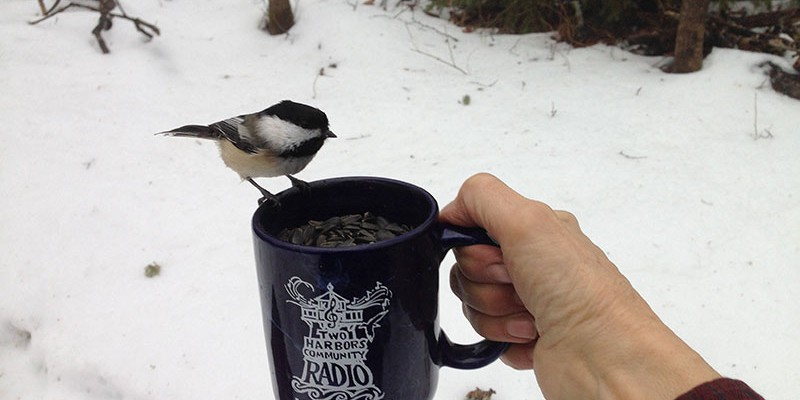 Chickadee-mug-shot